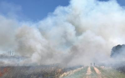The South's Fire Renaissance