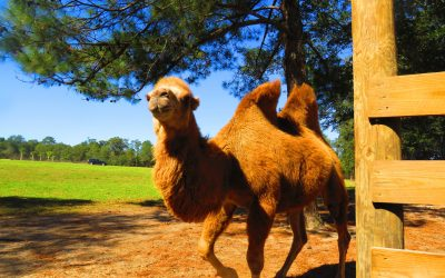 How to Feed Exotic Animals From Your Car at Eudora Farms